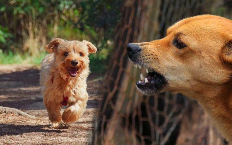 dwa psy, wolny pies, zły pies